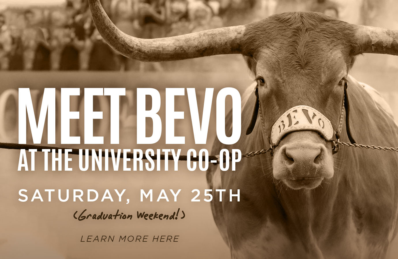 Meet Bevo Saturday